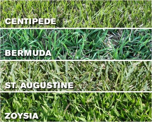 grass types tampa