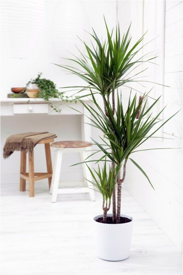 Types Of Small Indoor Palm Trees Indoor Palm Images which are the Typical Types Of Palm