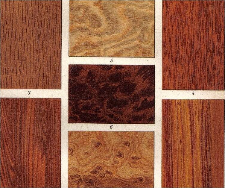 1903 wood types oak walnut tree ironwood
