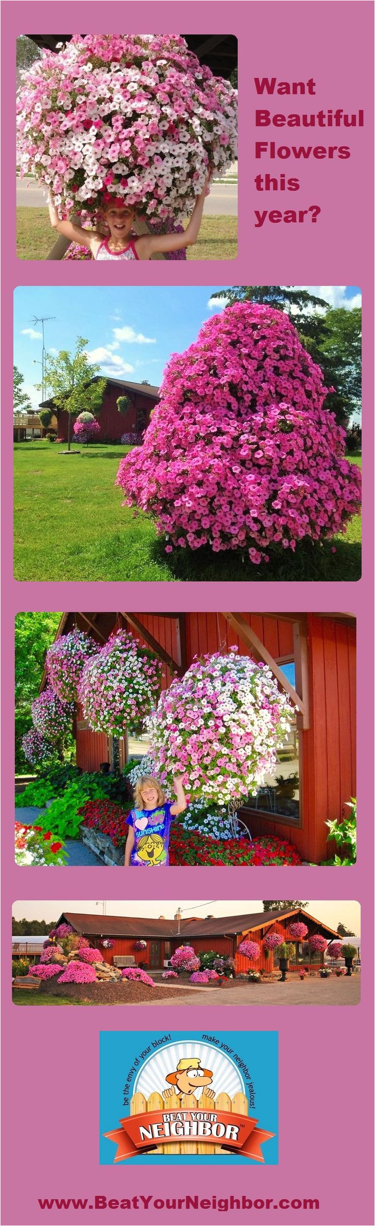 beat your neighbor all purpose plant food and fertilizer for flowers plants and vegetables
