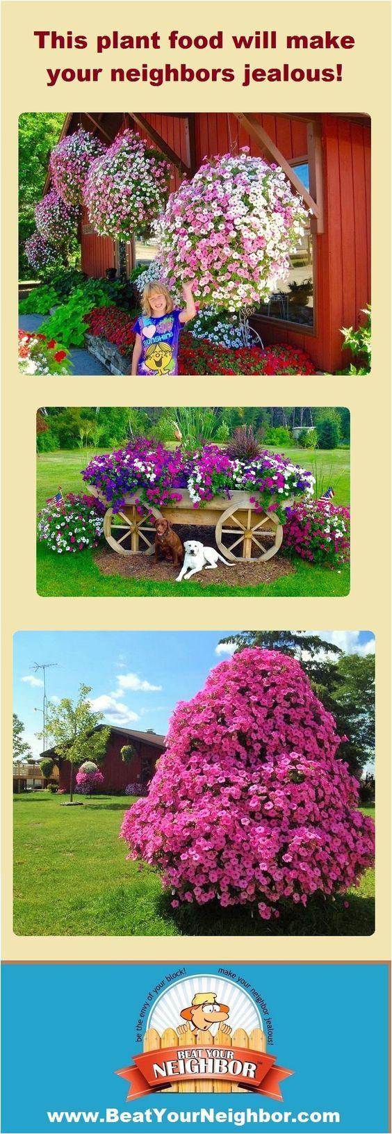 if you want huge flowers this year you need to check out www beatyourneighbor