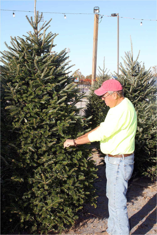 tis the season nothing says christmas more than the tree local news northwestgeorgianews com