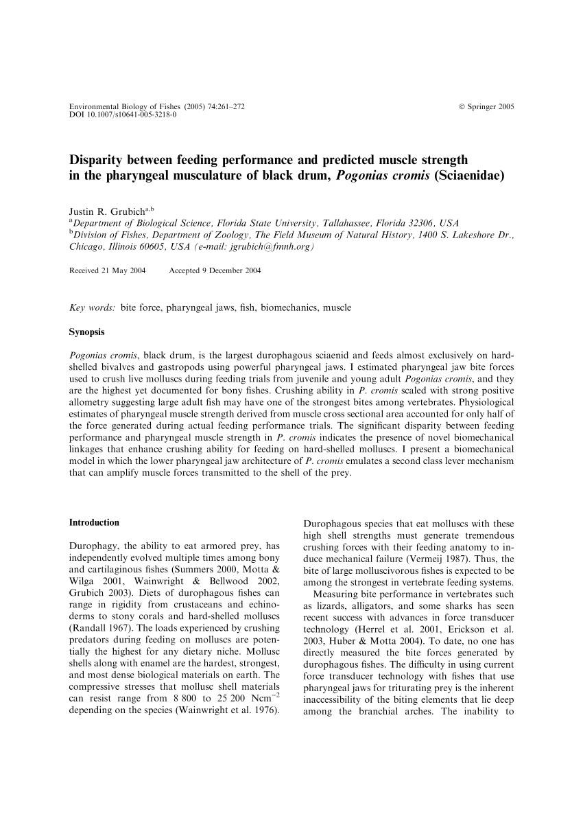 pdf disparity between feeding performance and predicted muscle strength in the pharyngeal musculature of black drum pogonias cromis sciaenidae