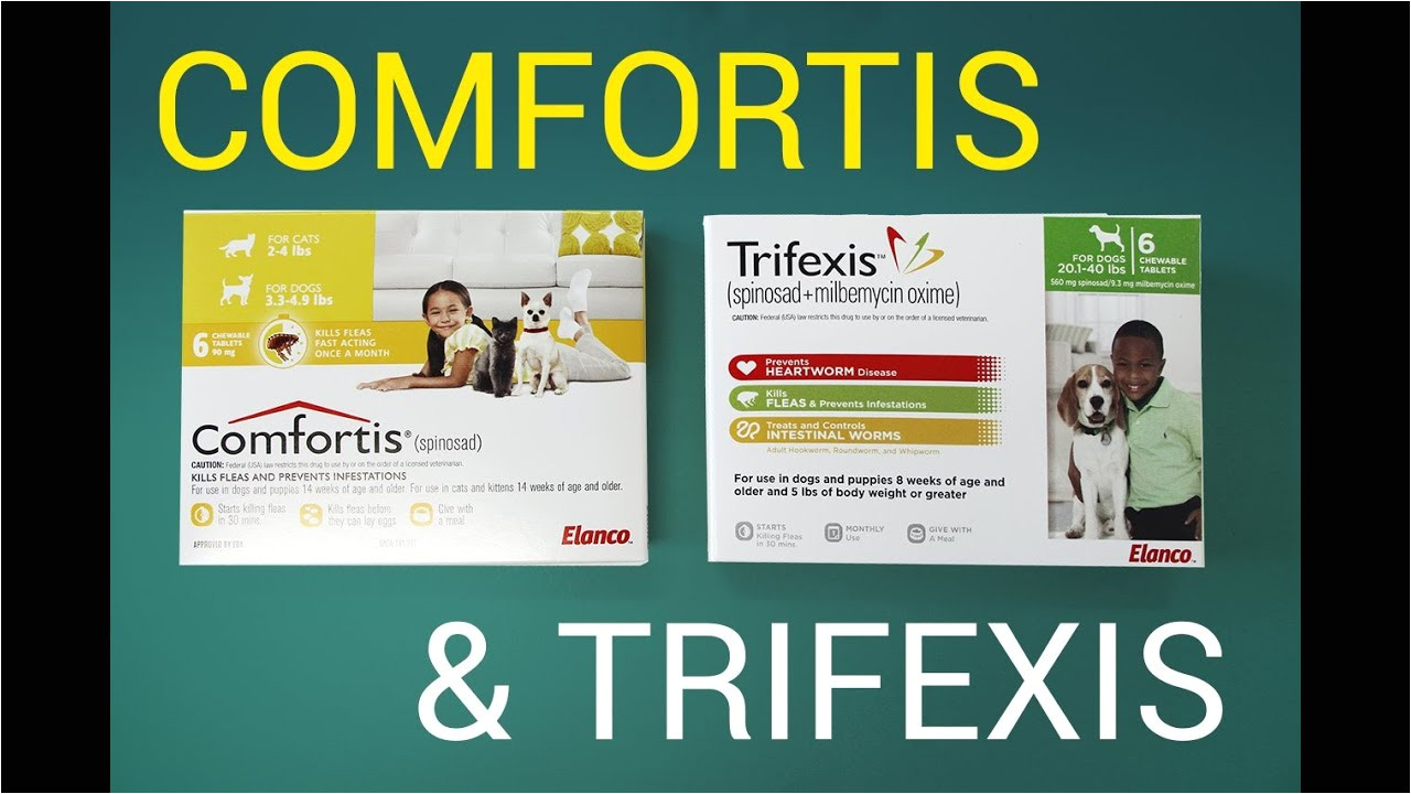 comfortis vs trifexis chewable comparison youtube