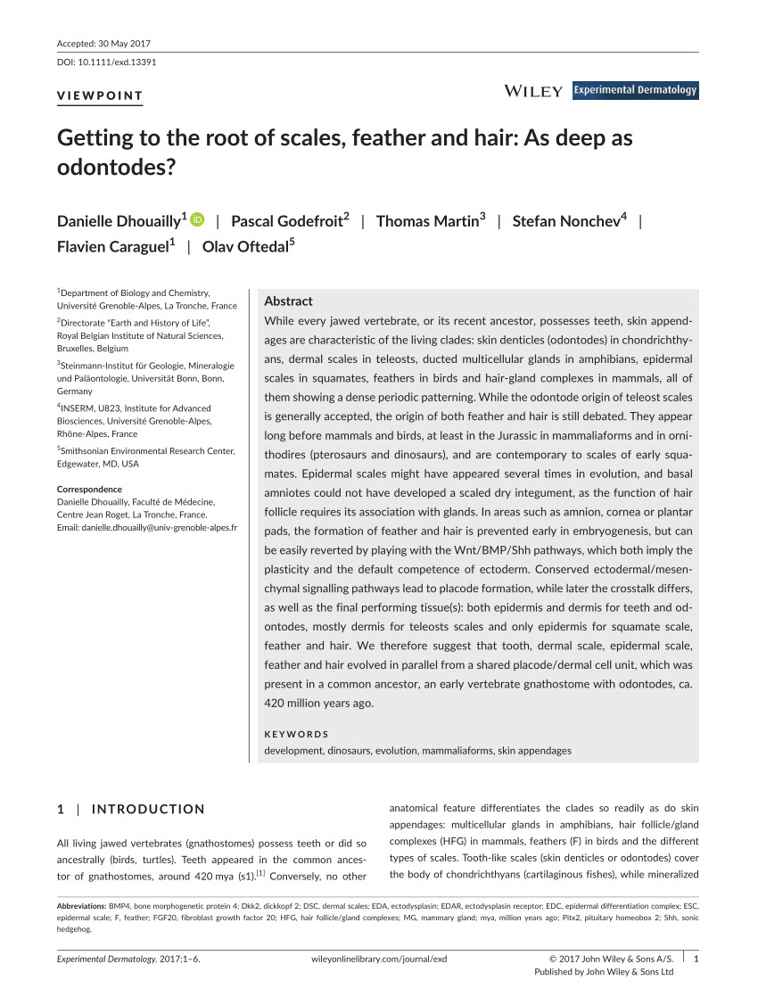 Difference Between Feather Down and Down Alternative Pdf Getting to the Root Of Scales Feather and Hair as Deep as