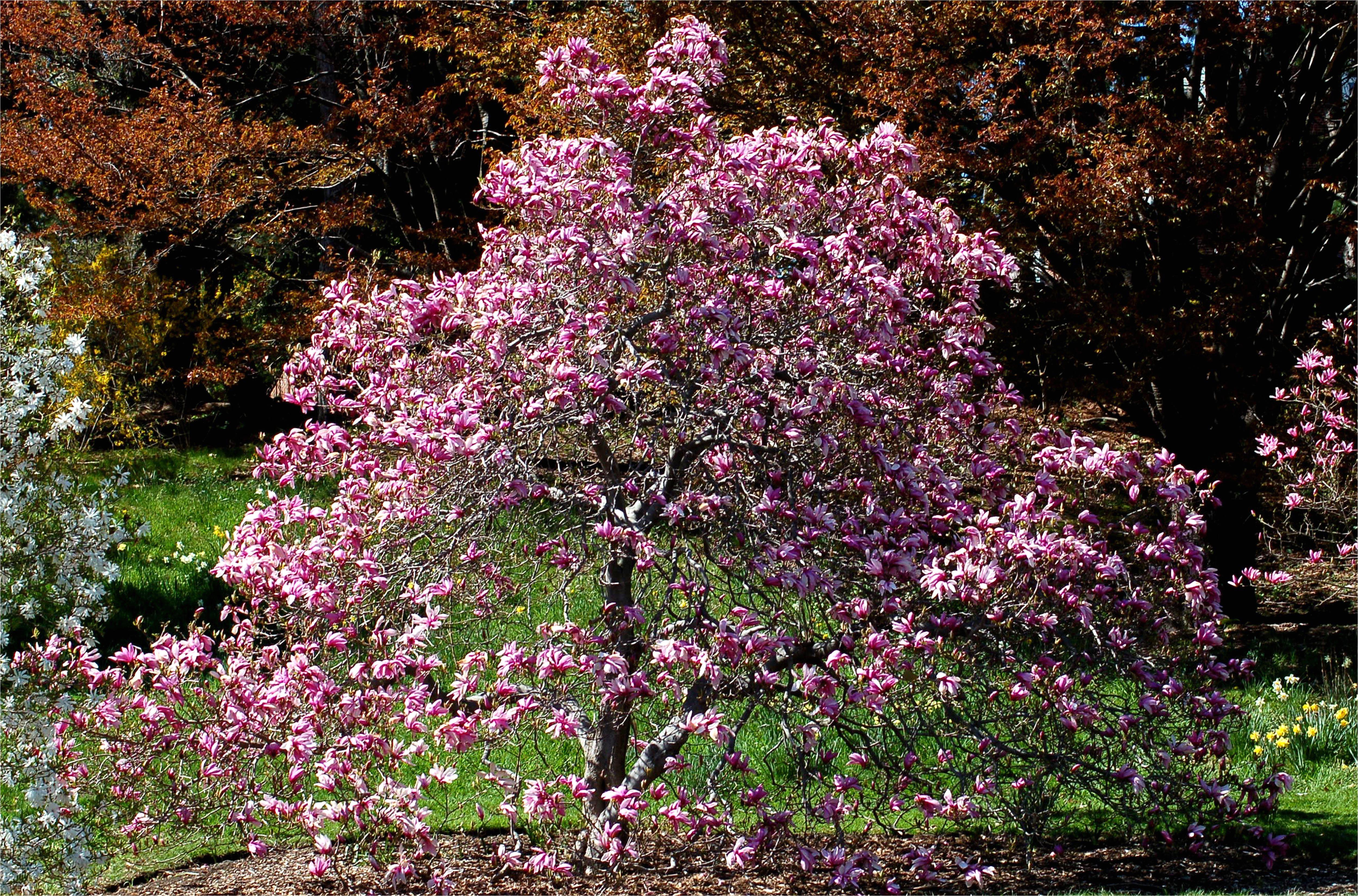 magnolia betty big 584094573df78c02303d8d1e jpg