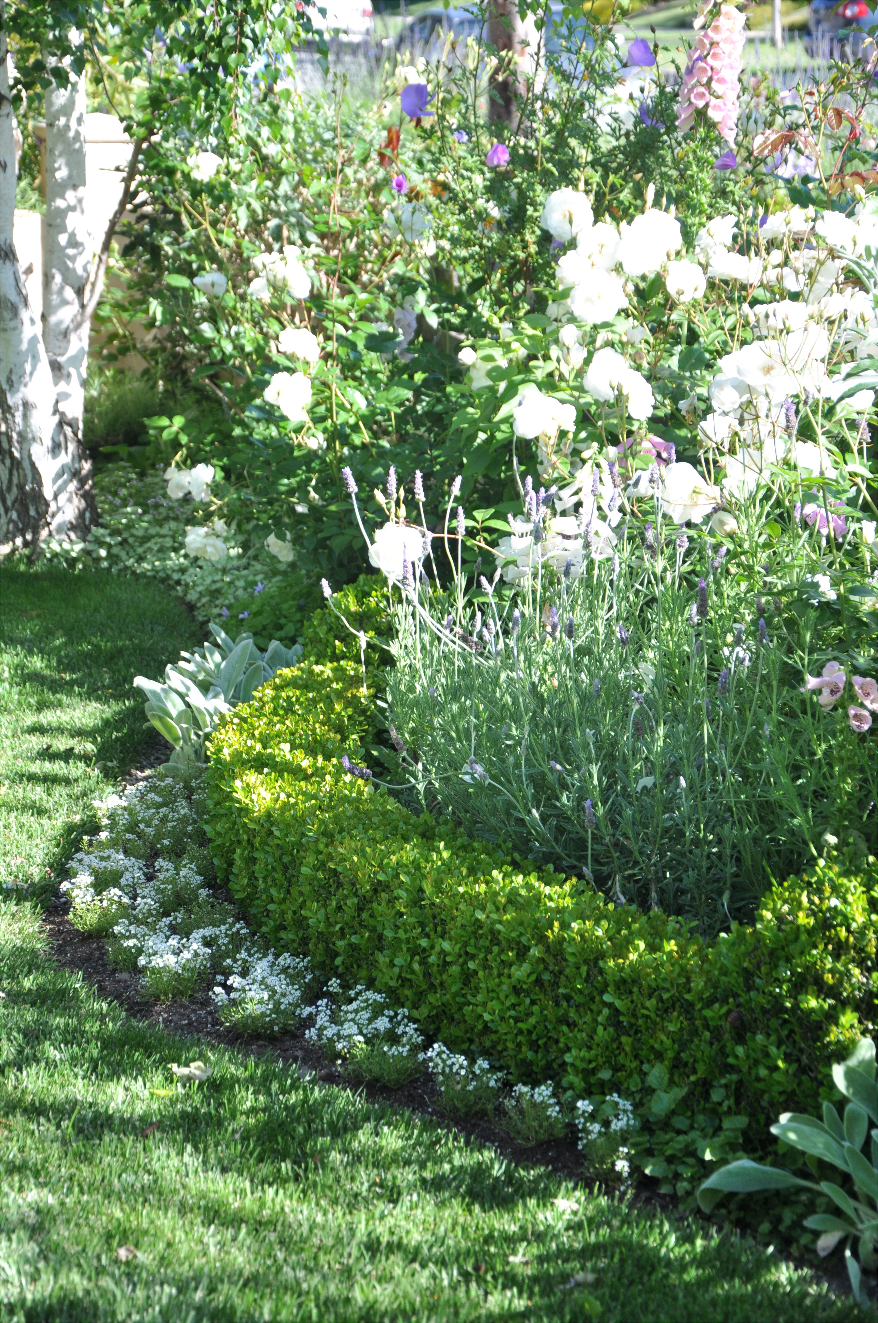 it s important to have a balance of structure and chaos in a garden more