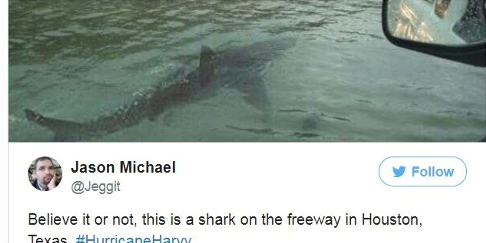 636396284015716361 shark jpg