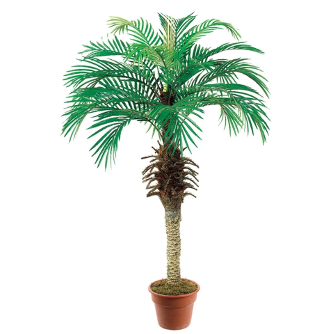 pack of 2 artificial decorative phoenix silk palm trees 4 green