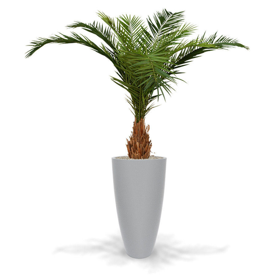 artificial canary phoenix deluxe palm tree 210 cm aruba 105 silver
