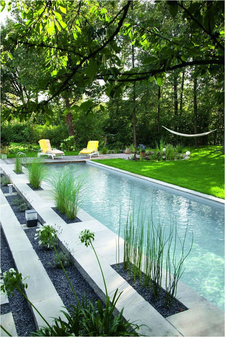 i would love to have a natural shipping container pool where we dont have to use chemicals or salt to keep the water clean plants like these do the trick