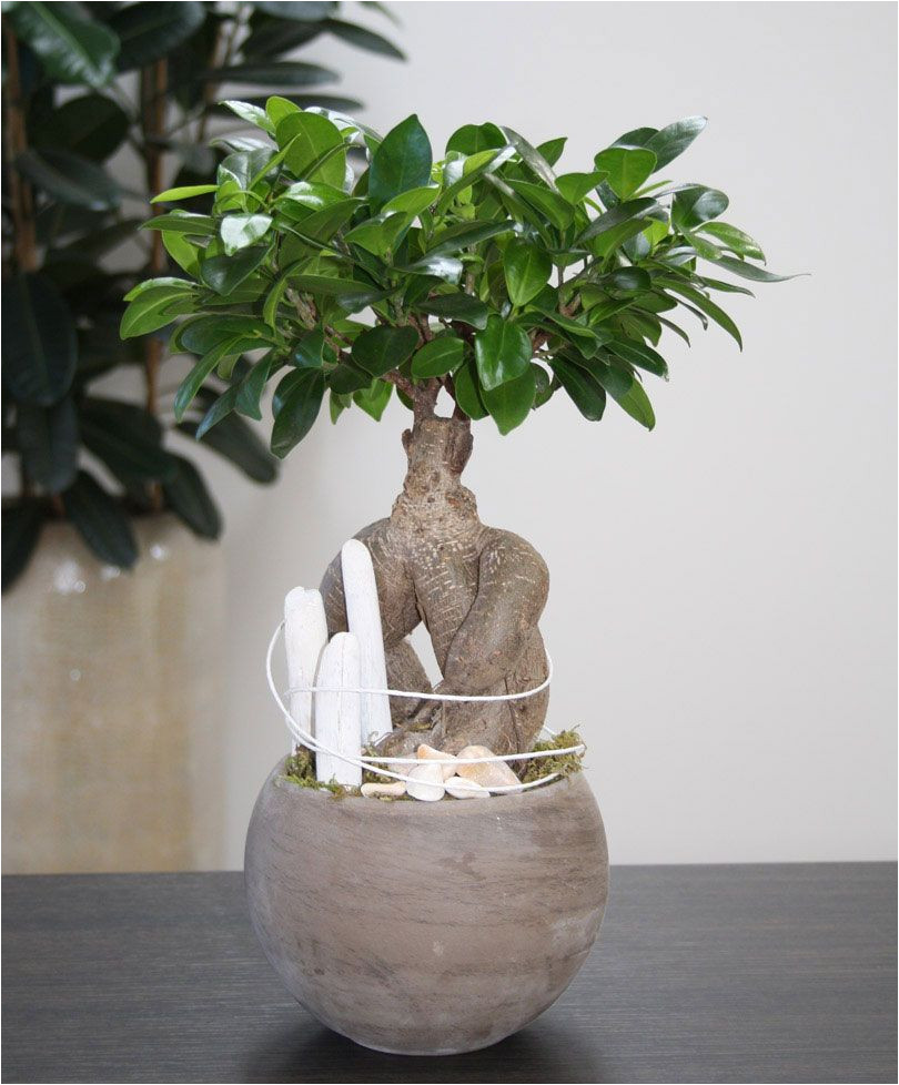 arrangement white beach you can create this beautiful natural arrangement the plant of