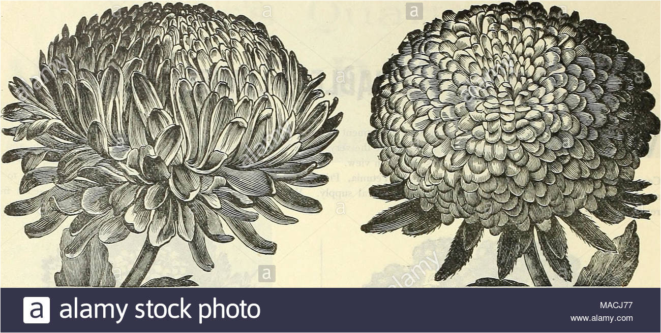 dreer s wholesale price list for 1901 flower seeds bulbs aquatics plants