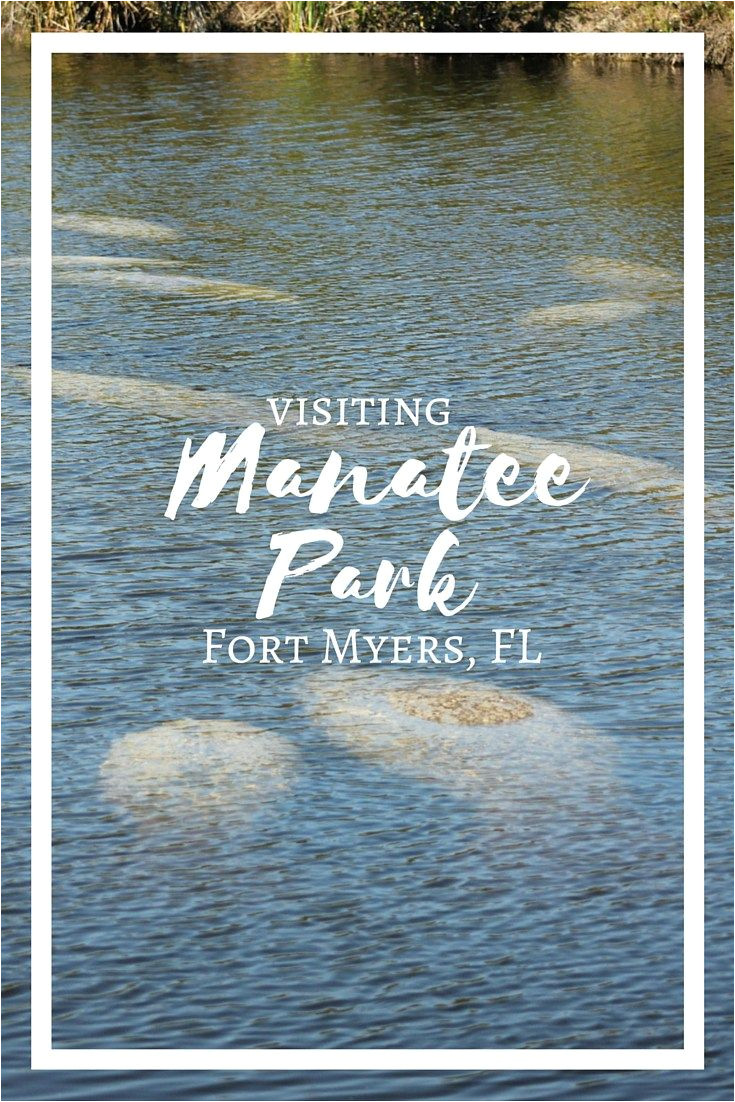 mantee park in fort myers florida is a great place to see manatees in their