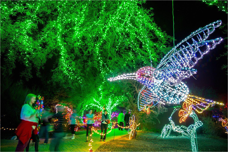 phoenix zoolights 5a6a4debc673350037f5f59b jpg