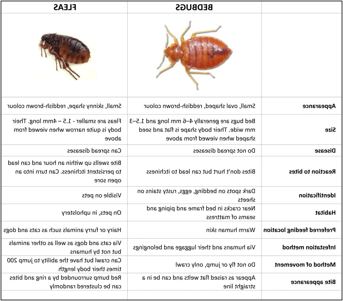 photo 3 of 10 bed bugs vs fleas table fleas in mattress 3