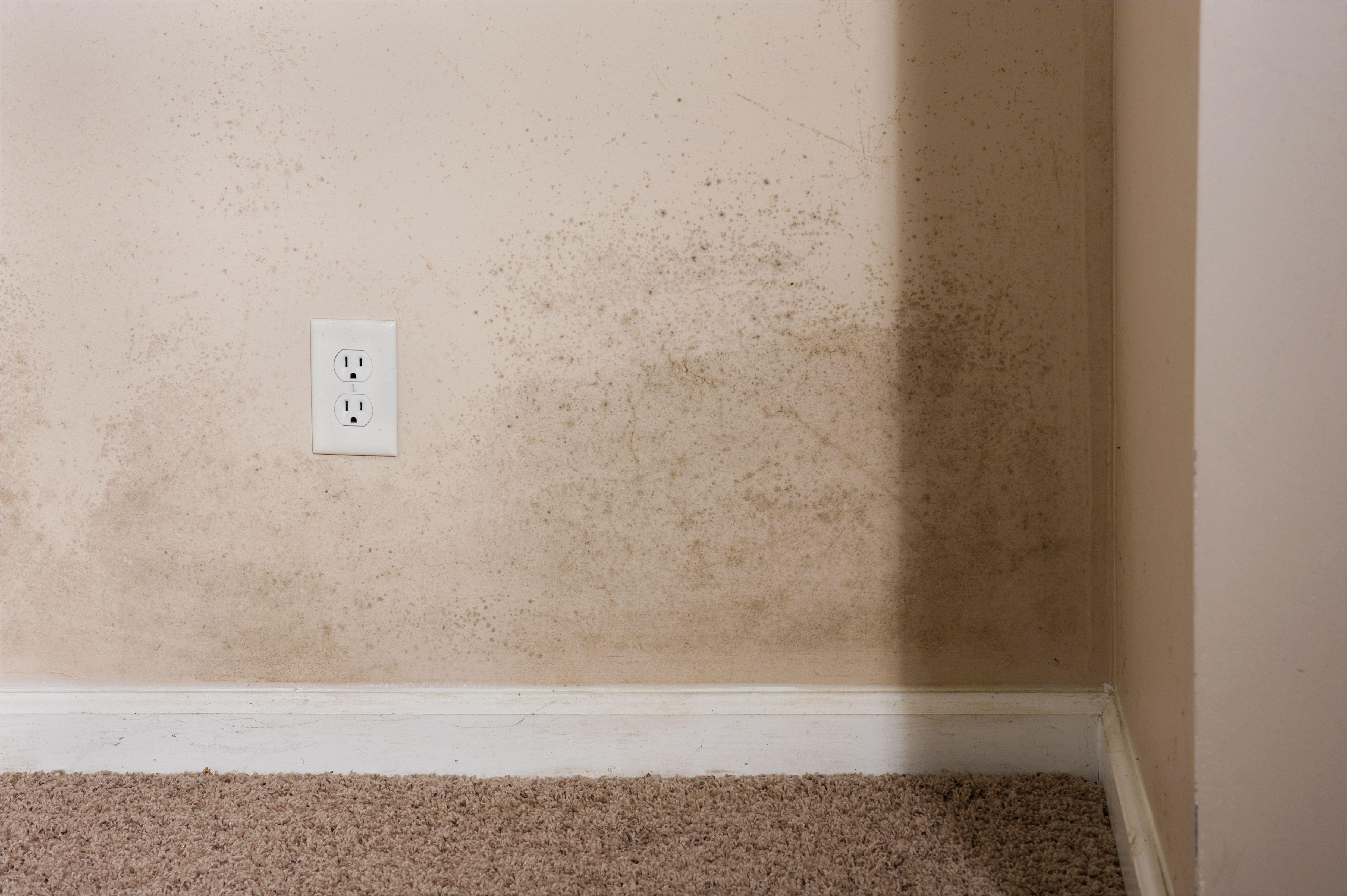 home interior mold e5f9b5815d9ddf60d