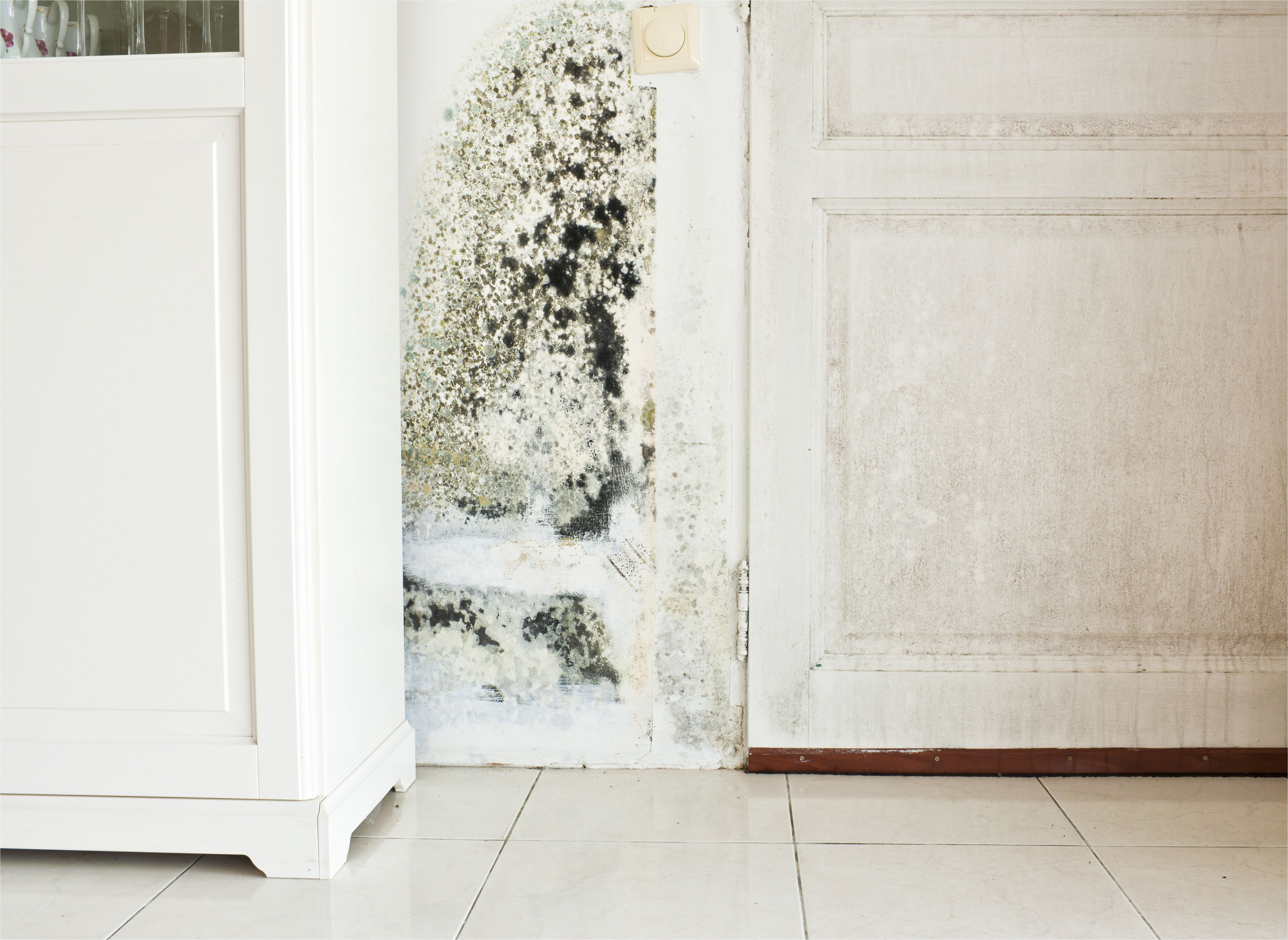 mold growth on wall and damp stained wood door 5ab2e4f2eb97de a7c