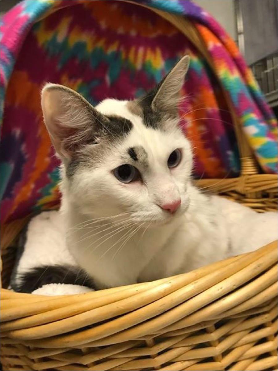 share pet listing