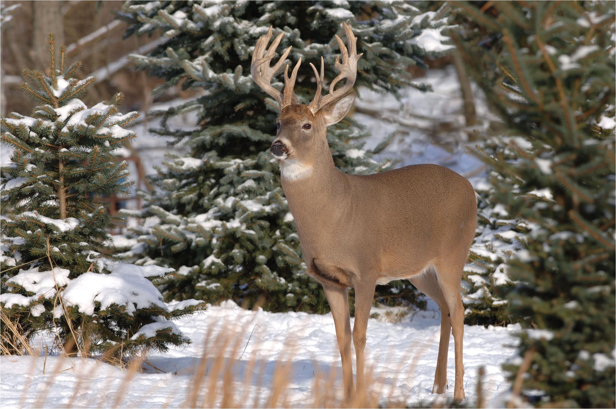 deer jpg