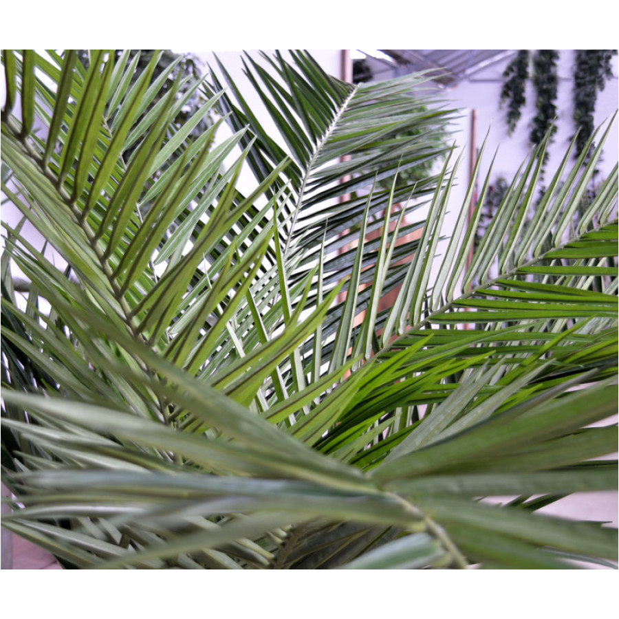 the long artificial silk leafs of the canary palm