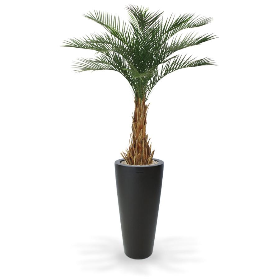 artificial phoenix deluxe palmtree 180 cm in tondo alto 100 cm anthracite