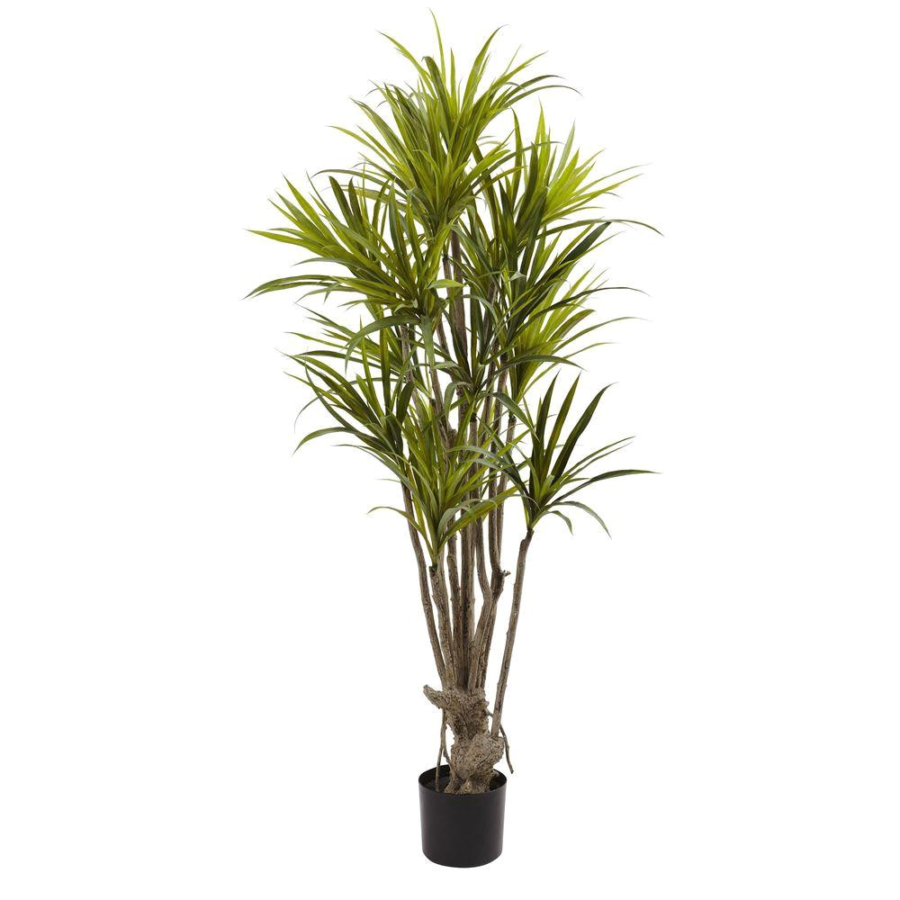 dracaena silk tree
