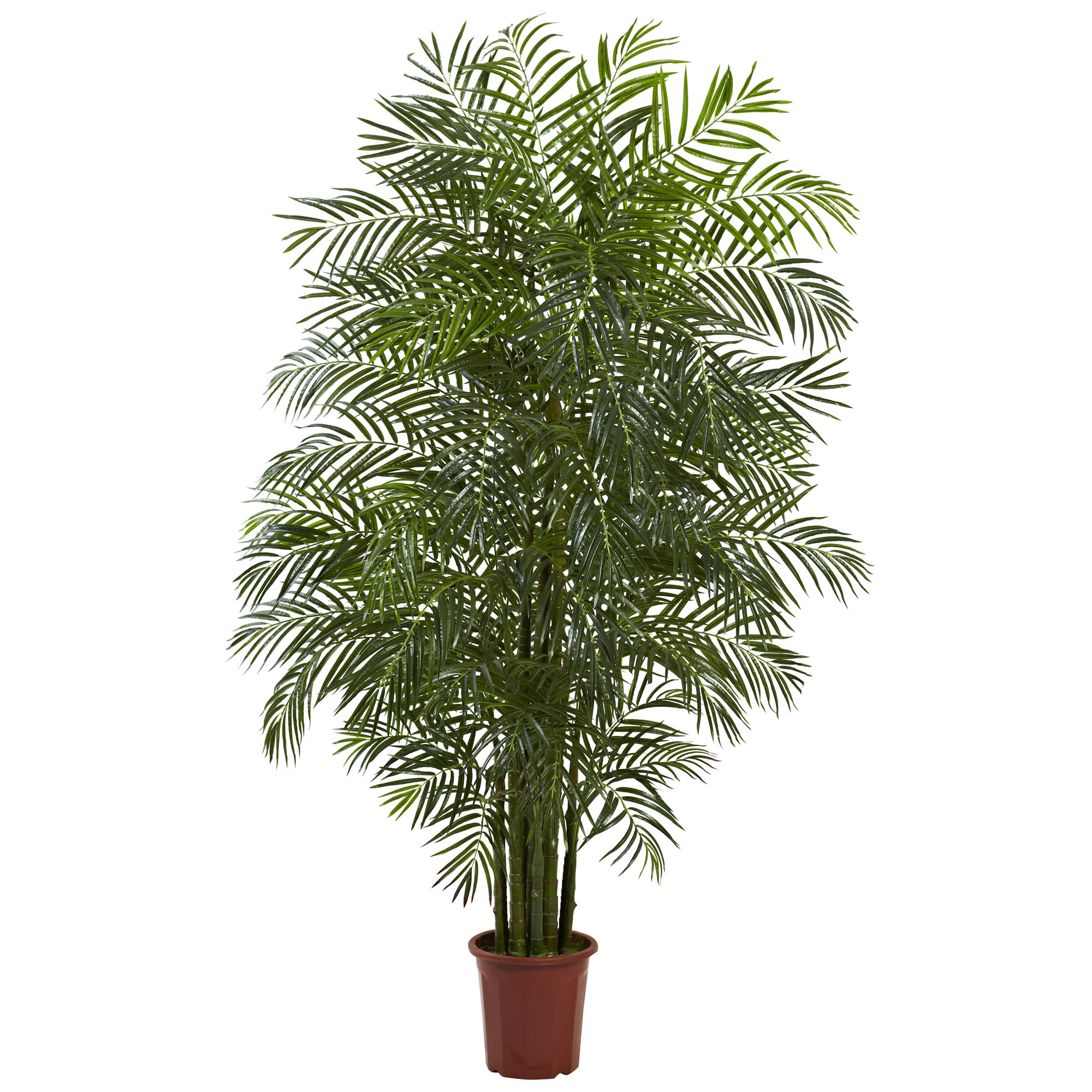 areca palm tree in pot jpg