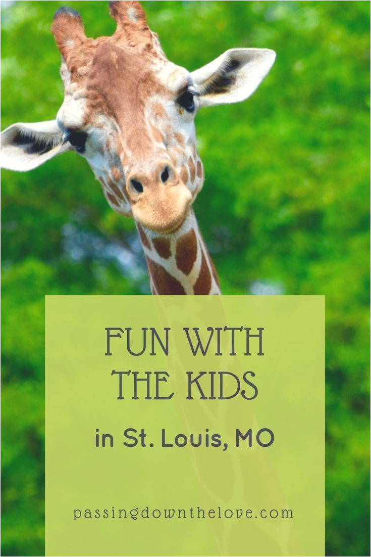 here are some fun things to do with kids in st louis some widely known but others unique hidden gems plan and love your visit to st