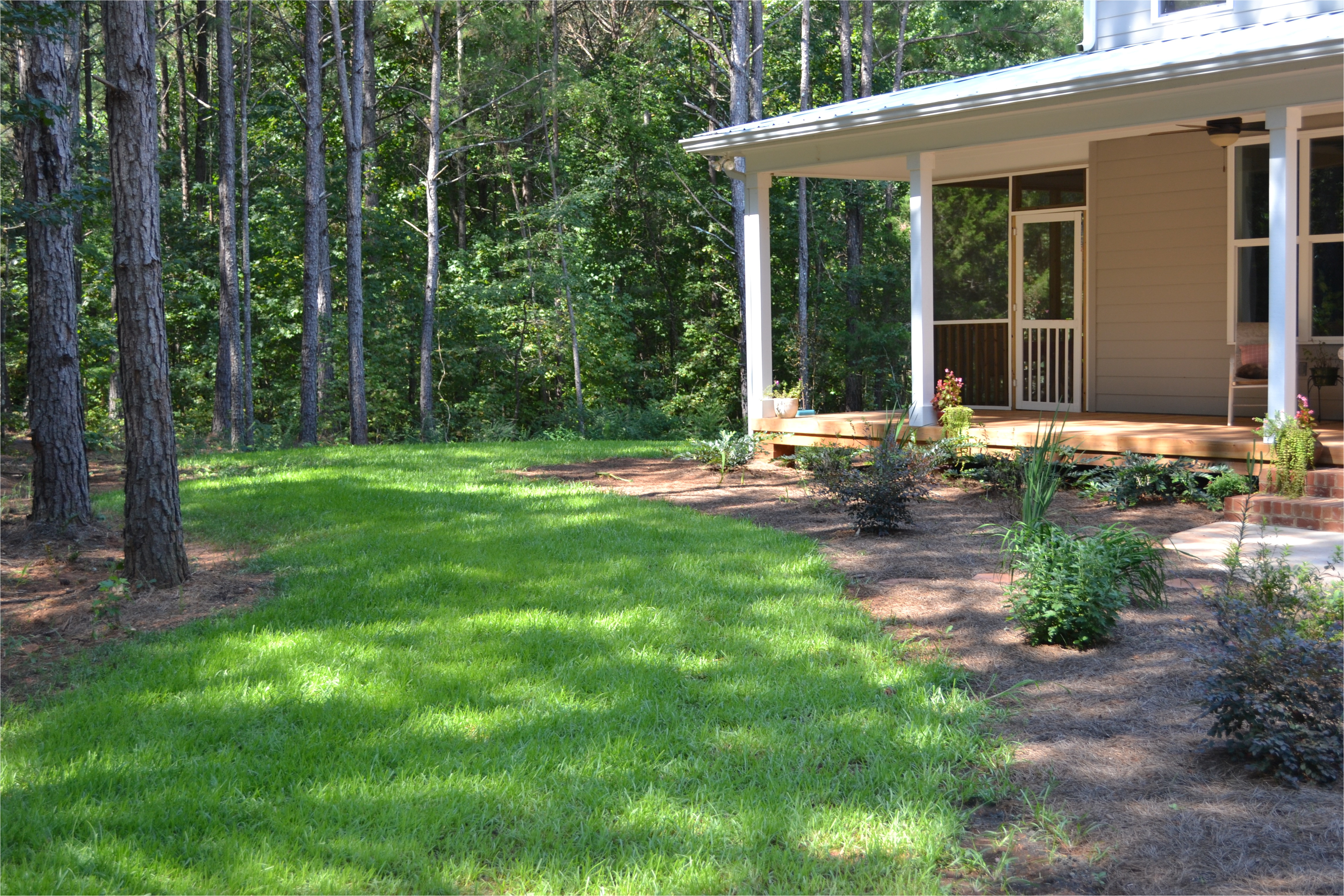how to seed a tifblair centipede lawn care tips