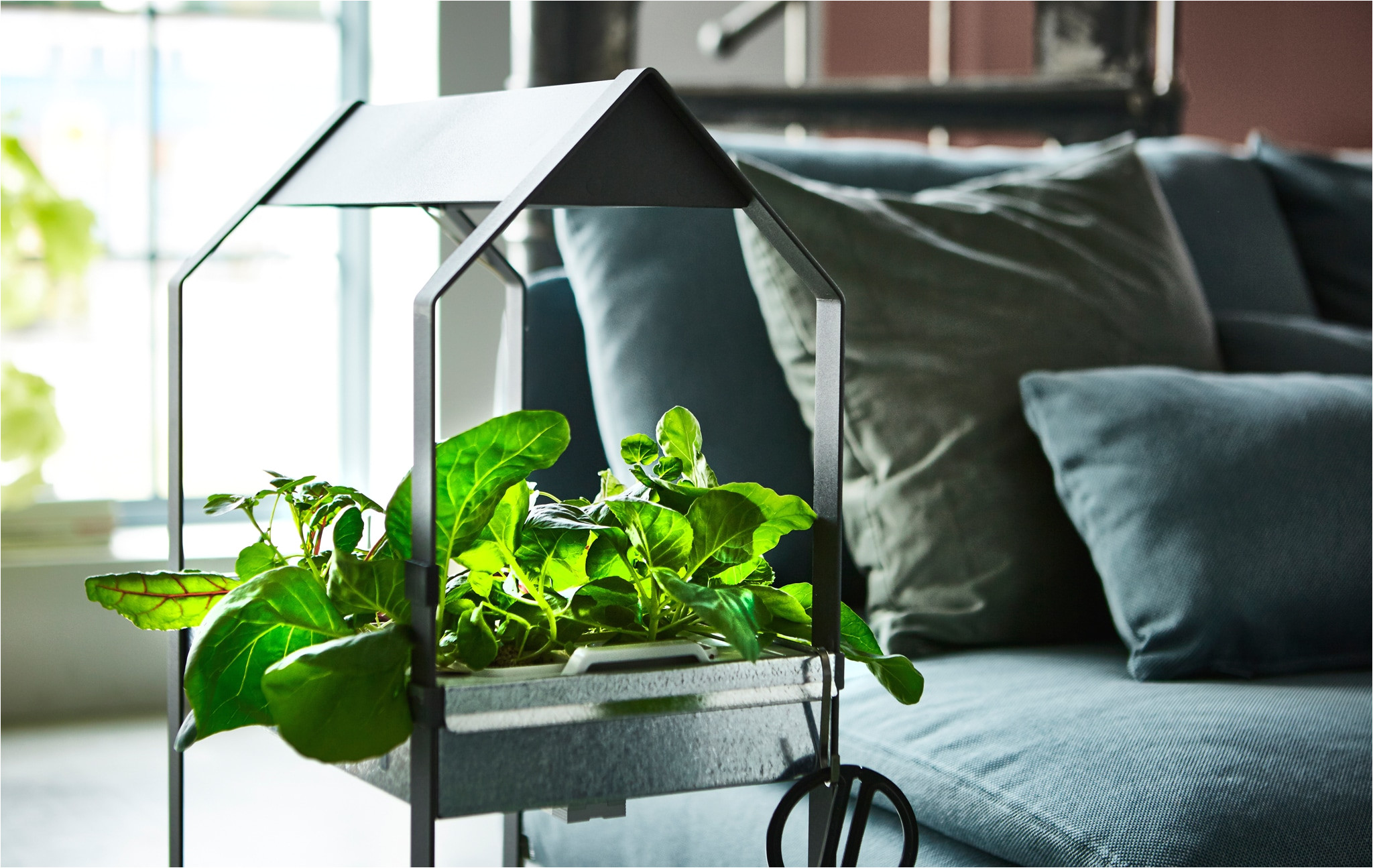 a plant stand filled with herbs and greens sits in a living room next to a