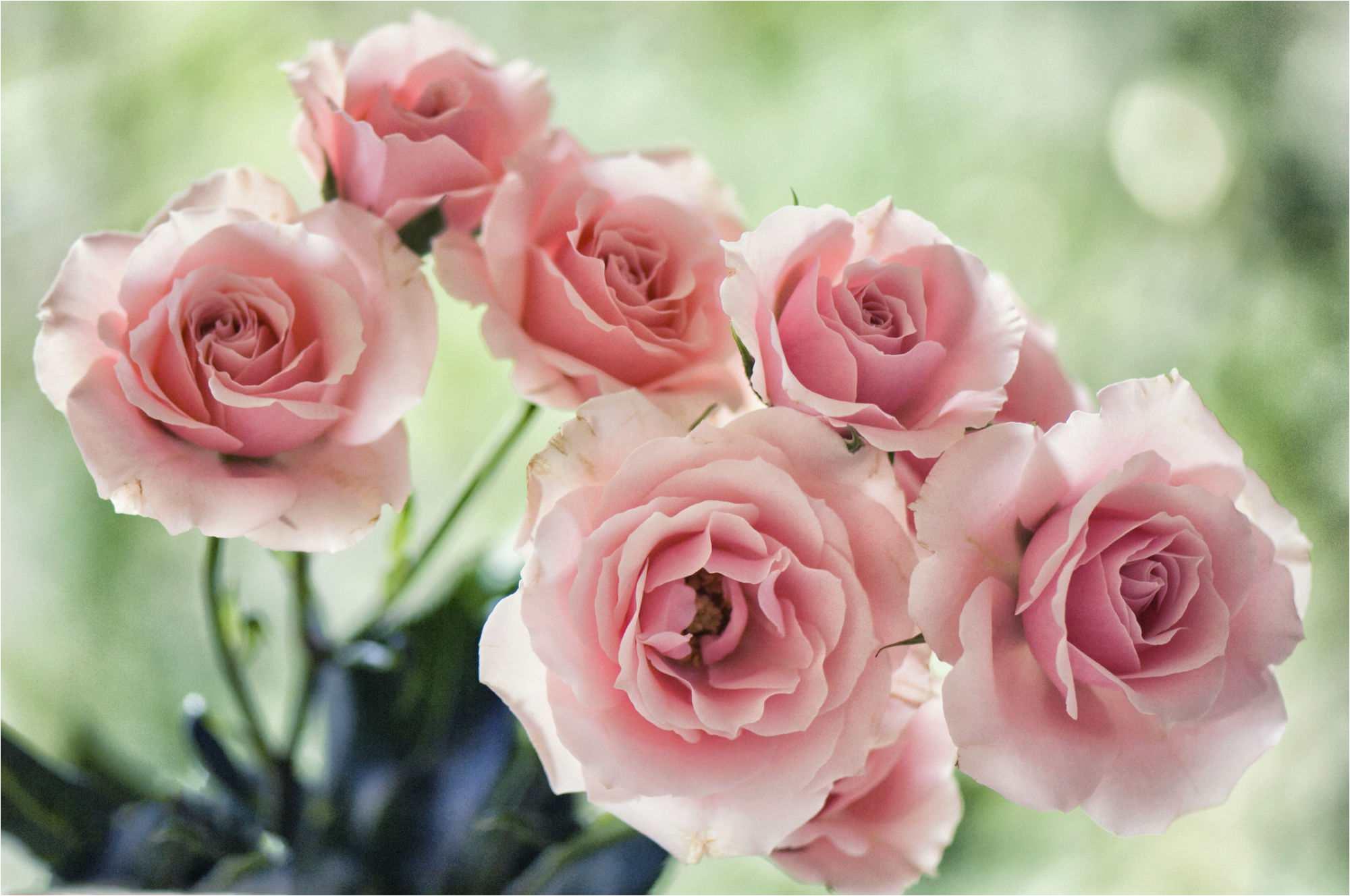 florists soft pink spray rose majolica