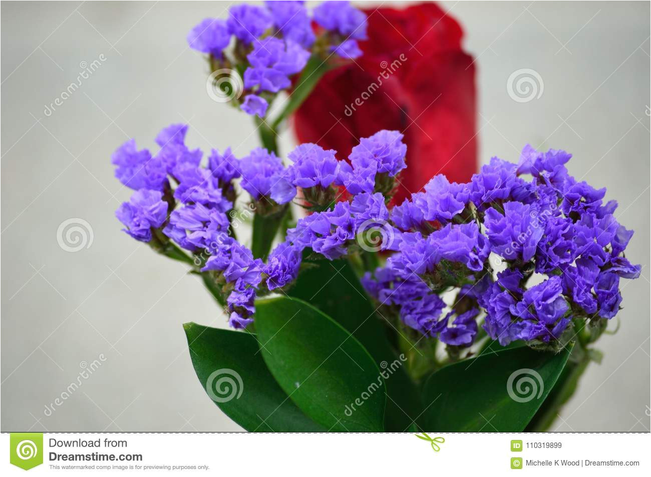 statice limonium sinuatum genus limonium is commonly used as filler in floral arrangements and bouquets it has distinctive spiky flowers and simple or