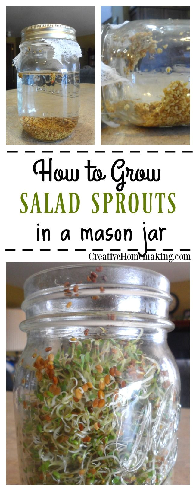 easy instructions for growing your own salad sprouts from seed in a mason jar on the