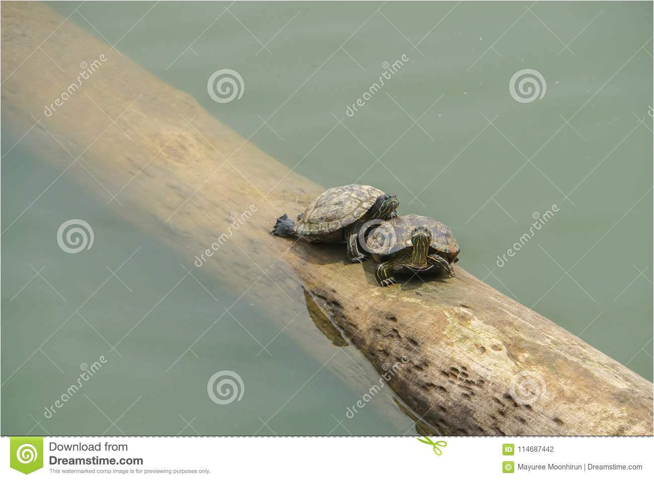 turtles on floating log in the river