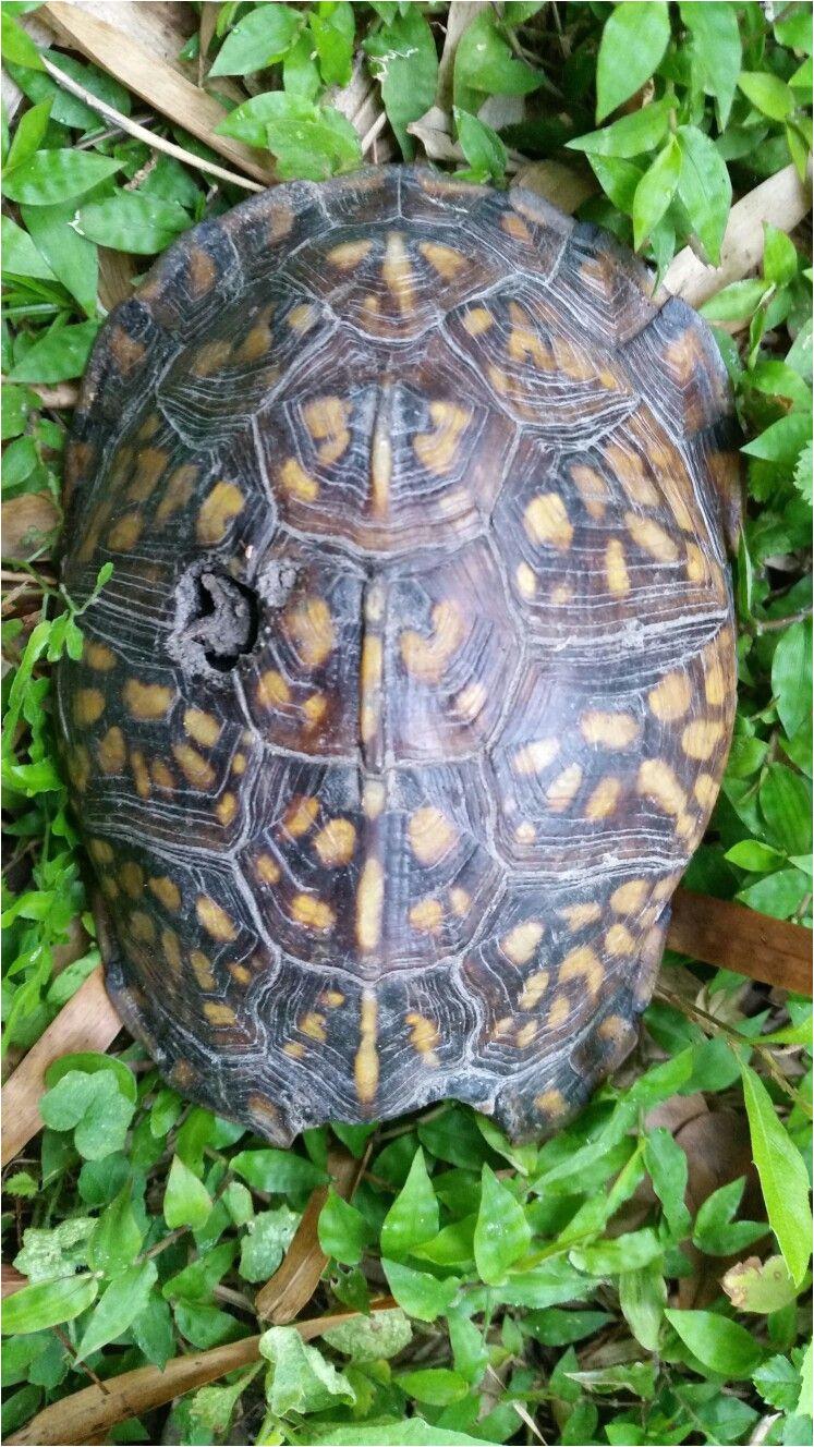 turtles gardening tortoises turtle garden yard landscaping urban homesteading horticulture