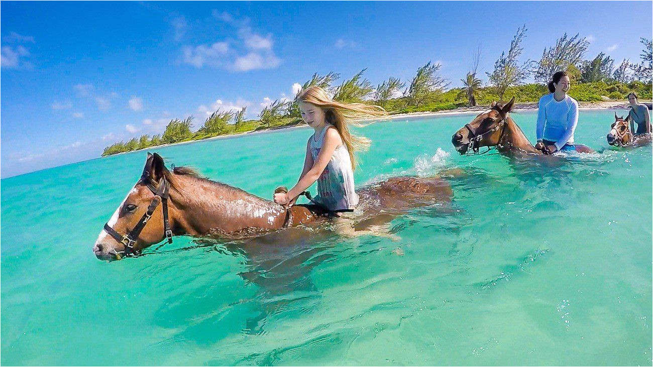 yes you can ride a swimming horse this pampered ponies tour is one of the best things to do in grand cayman with kids and without