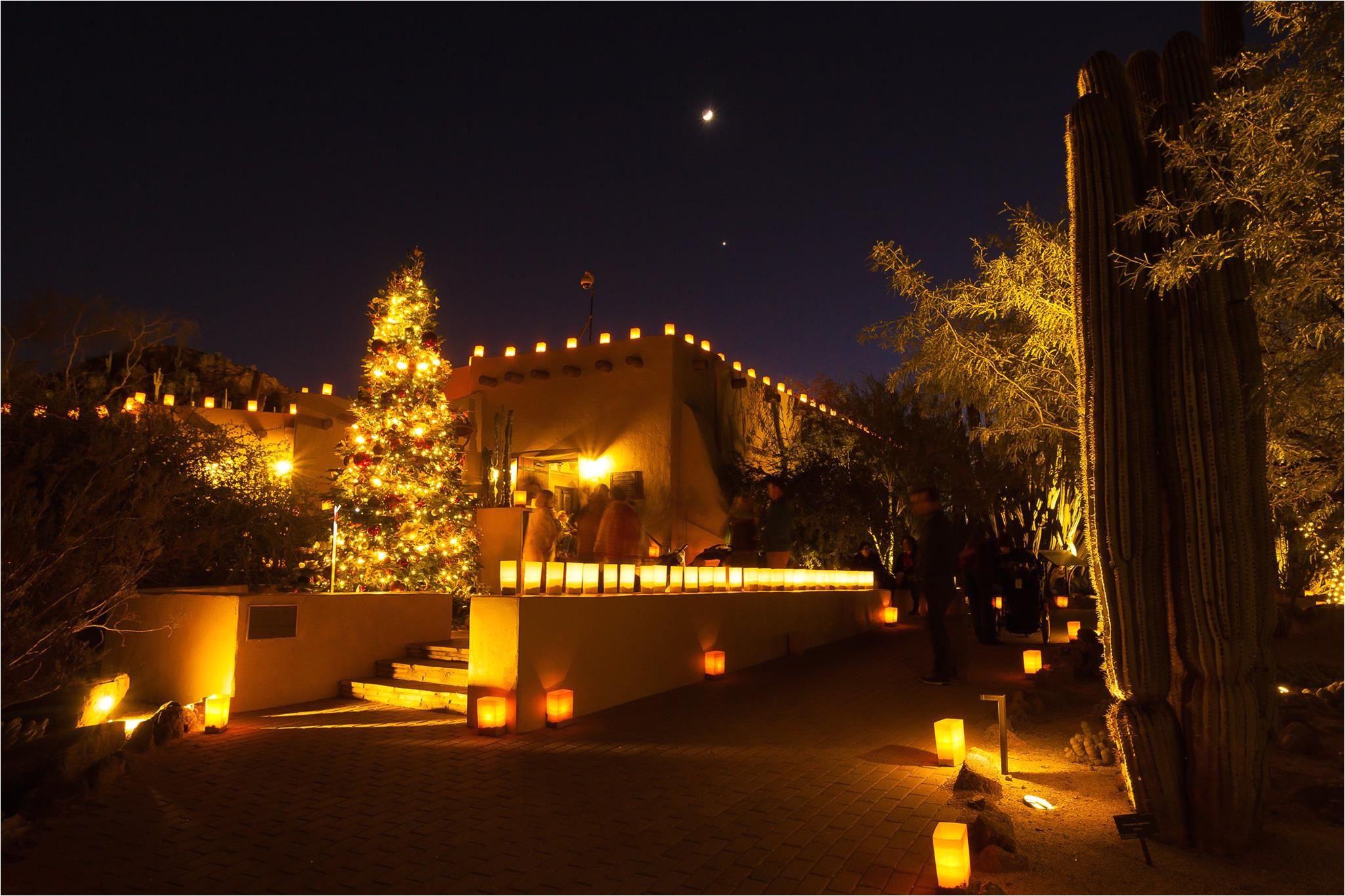 las noches de las luminaries desert botanical gardens phoenix