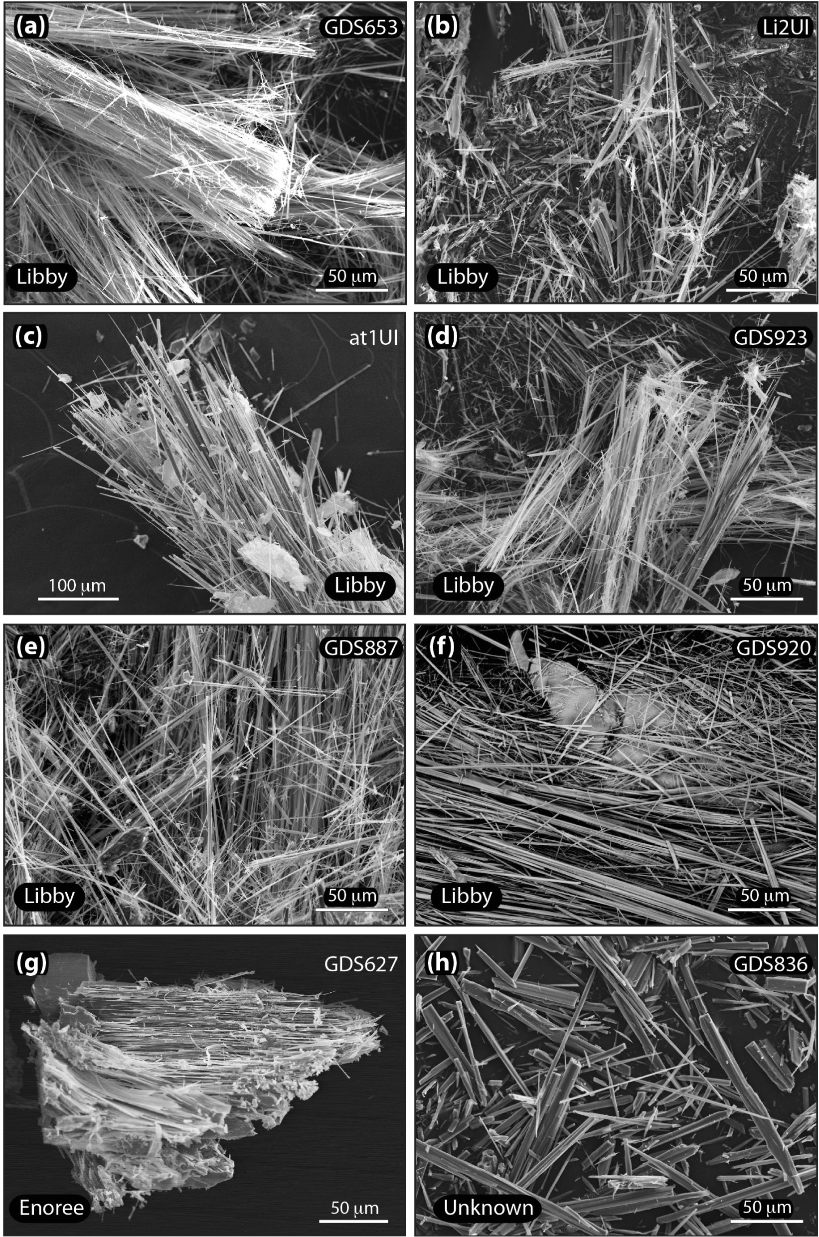 secondary electron images of elongate amphibole bundles from the sink fractions of commercial expanded vermiculite ore