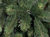 100 Pe Christmas Tree Best Artificial Premium 7ft Realistic Christmas Tree