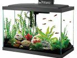 20 Gallon Fish Tank Starter Kit Aqueon 100530578 Aqueon Aquarium Fish Tank Starter Kits