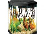 20 Gallon Fish Tank Starter Kit Aqueon 20 Gallon Hex Aquarium Starter Kit Fish Starter