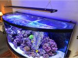 50 Gallon Bow Front Aquarium 50 Gallon Bowfront Aquarium 1000 Aquarium Ideas