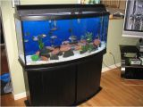 50 Gallon Bow Front Aquarium Exploring the Best Bow Front Aquariums for Your Home