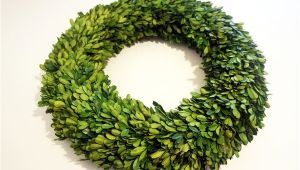6 Inch Preserved Boxwood Wreath wholesale Garden Fresh 20 Quot Boxwood Wreath Tradingsmith
