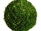 6 Inch Preserved Boxwood Wreath wholesale Preserved Boxwood Ball 22 Inch Bella Marie