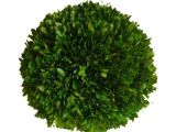 6 Inch Preserved Boxwood Wreath wholesale Preserved Boxwood Ball 6 Quot Flora Decor