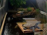 Above Ground Turtle Pond A Couple Of Diamondback Terrapins Greeted Me This Morning at Zoo Med
