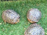 Above Ground Turtle Pond Box tortoises Turtles tortoises Pinterest tortoise Turtle