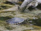 Above Ground Turtle Pond How to Take Care Of Turtles and tortoises